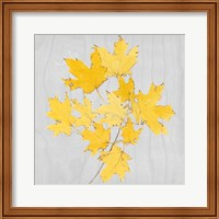 Autumn Leaves VII Fine Art Print