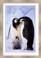 Penguin Family Portrait Fine Art Print