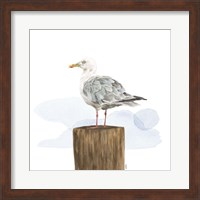 Birds of the Coast on White IV Fine Art Print