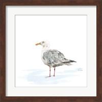 Birds of the Coast on White VI Fine Art Print