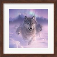 Running Wolves - Northern Lights - Square Fine Art Print