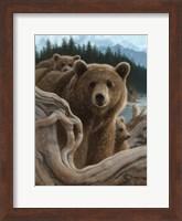 Brown Bears - Backpacking Fine Art Print