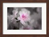 Pink Azalea Fine Art Print