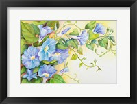 Trailing Vine Morning-Glories Fine Art Print