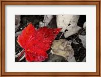 Red Leaf Fine Art Print
