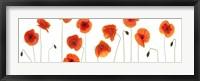 Row of Poppies on White Fine Art Print