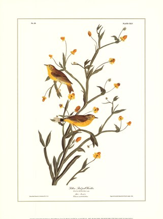 Framed Yellow Red-Poll Warbler Print