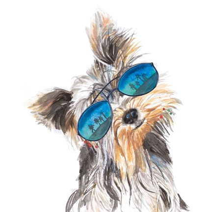 Framed Yorkie with Shades Print