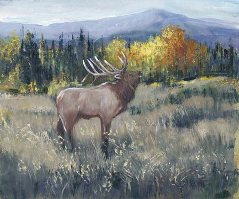 Framed Rocky Mountain Elk II Print