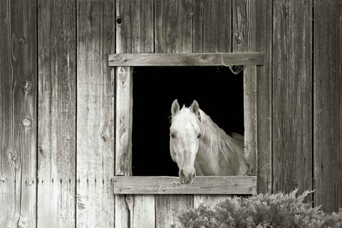 Framed Welcome Mare Print