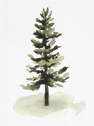 Framed Watercolor Pine II Print