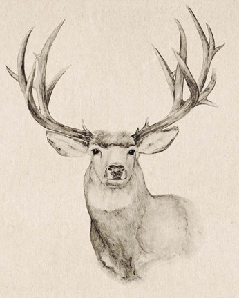 Framed Natural Buck II Print