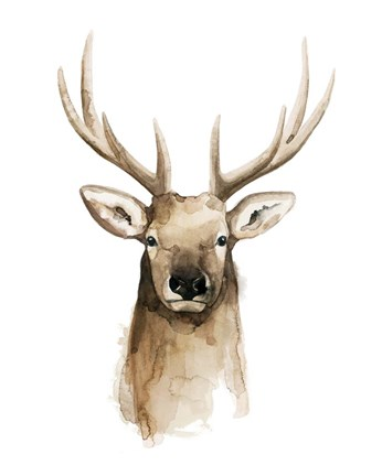 Framed Watercolor Elk Portrait II Print