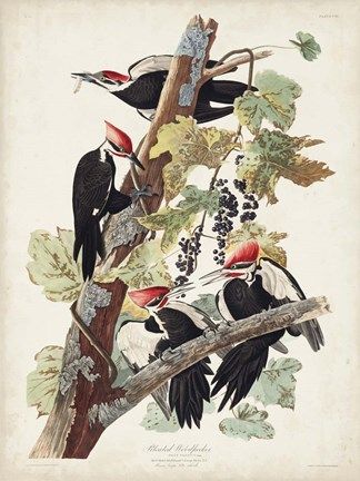 Framed Pl. 111 Pileated Woodpecker Print