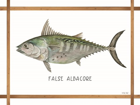 Framed False Albacore on White Print