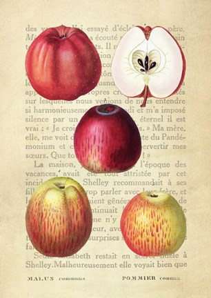 Framed Apple, After Redoute Print
