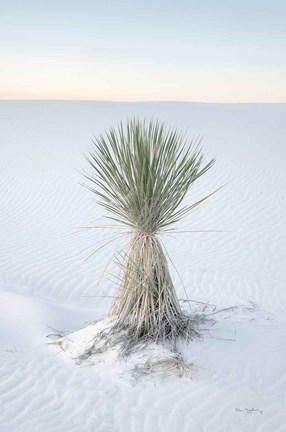 Framed Yucca in White Sands National Monument Print