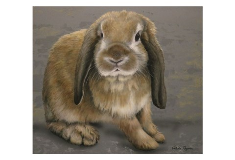 Framed Lop-eared Bunny Print