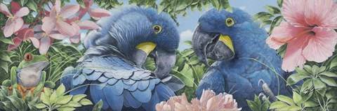 Framed Blue Macaws Print