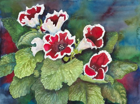 Framed Red and White Gloxinia Print