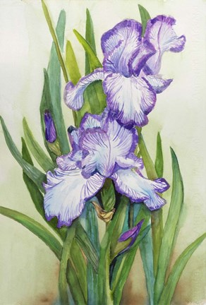 Framed Iris Dressed in Purple and White Print