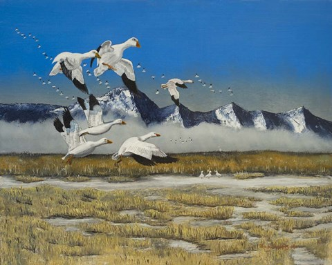 Framed Sow Geese Spring Flight Print