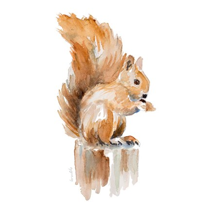 Framed Watercolor Squirrel Print