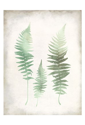 Framed Watercolor Fern 1 Vintage Print