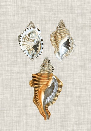 Framed Antique Shells on Linen III Print
