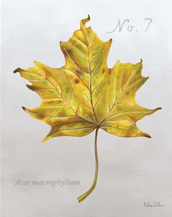 Framed Autumn Leaves on Gray II-Maple 2 Print