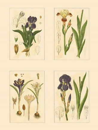 Framed Miniature Botanicals I Print