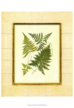 Framed Fern with Crackle Mat  I Print