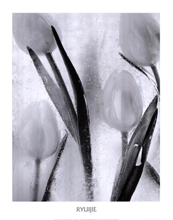 Framed Tulips on Ice Print