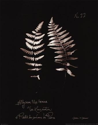 Framed Fern Plate No. 22 Print