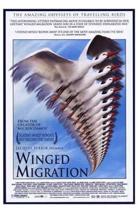 Framed Winged Migration Print