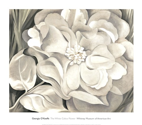 Framed White Calico Flower, 1931 Print