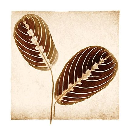 Framed Maranta Leaves Print