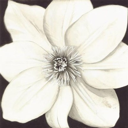 Framed White Flower (Black Background) Print