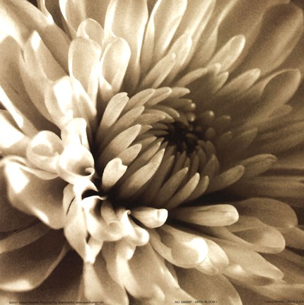 Framed Sepia Bloom I Print