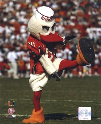 Sebastian The Mascot Of University Of Miami Hurricanes