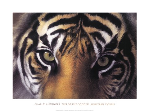 Framed Eyes of the Goddess: Sumatran Tigress Print