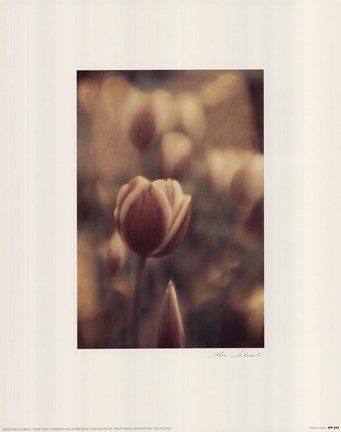 Framed Tinted Tulips II Print