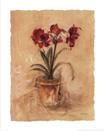 Secret Amaryllis Ii Fine Art Print By Cheri Blum At