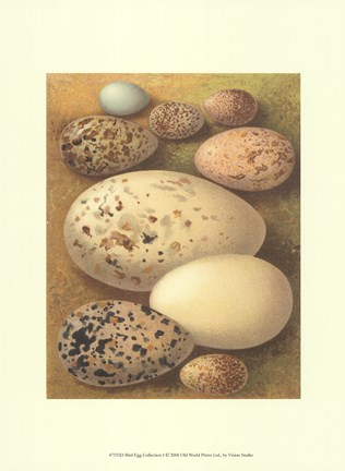 Framed Bird Egg Collection I Print