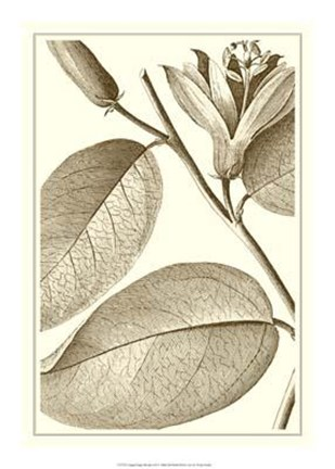 Framed Cropped Sepia Botanical II Print