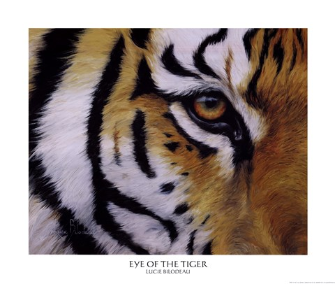 Framed Eye of the Tiger Print