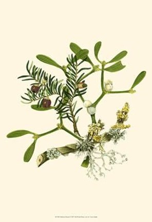 Framed Mistletoe Branch Print
