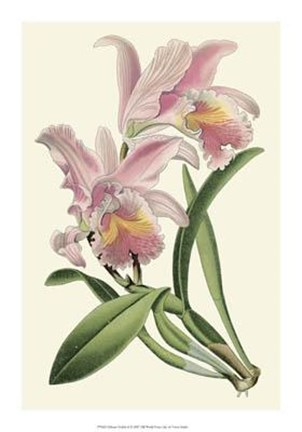 Framed Delicate Orchid III Print