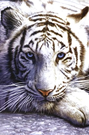 Framed White Tiger Print
