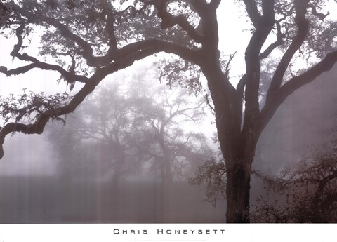Framed Oaks In Fog, Mendocino Print